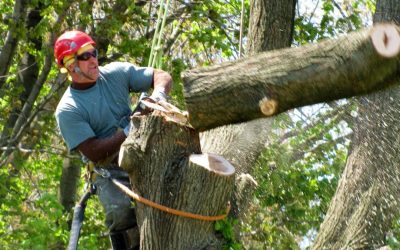 Tree Removal Services – How To Choose A Tree Removal Service