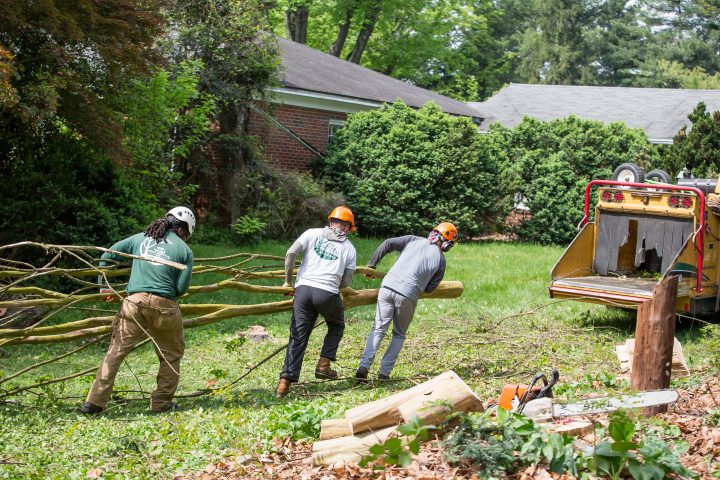 Tree Service – Why You Need to Consider Tree Service