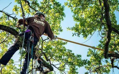 4 Reasons For Hiring a Tree Removal Service