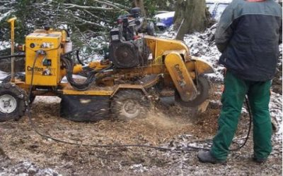 How Tree Services Benefit You