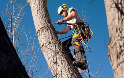 What Should You Look For When Hiring Tree Removal Services?